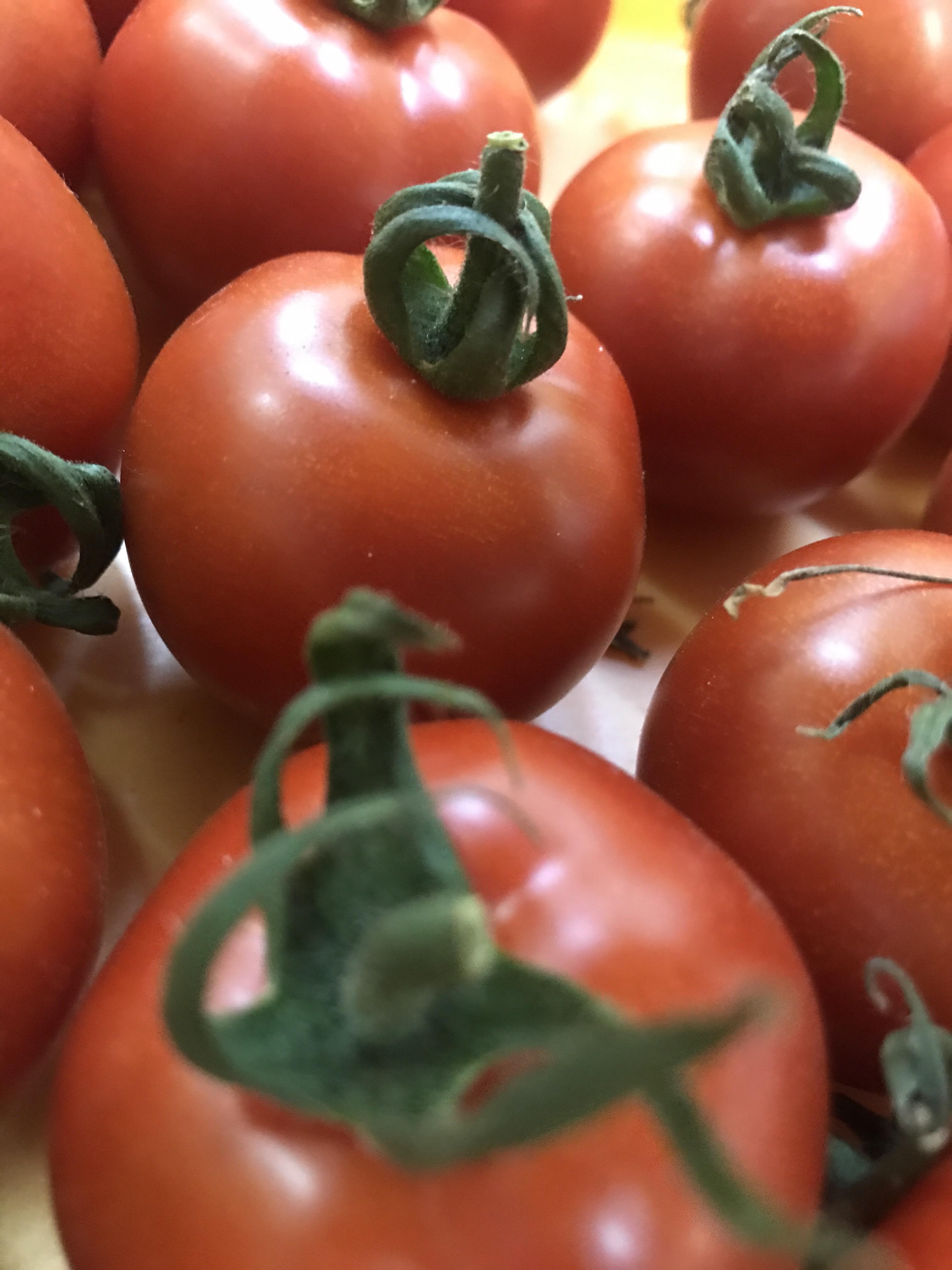 しんぼりくんちのトマト大福